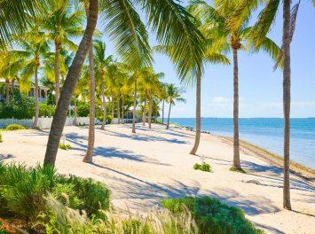 Strandpalmen, Miami Beach